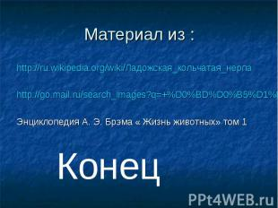 Материал из :http://ru.wikipedia.org/wiki/Ладожская_кольчатая_нерпа http://go.ma