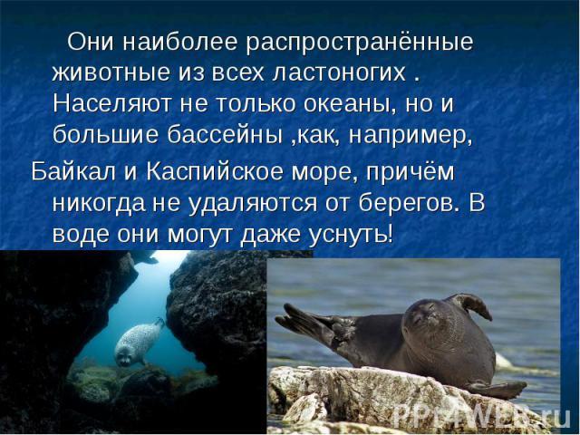Они наиболее распространённые животные из всех ластоногих . Населяют не только океаны, но и большие бассейны ,как, например, Байкал и Каспийское море, причём никогда не удаляются от берегов. В воде они могут даже уснуть!