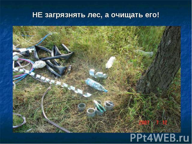НЕ загрязнять лес, а очищать его!