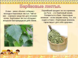 Берёзовые листья. В мае – июне обычно собирают молодые березовые листья. Чай из
