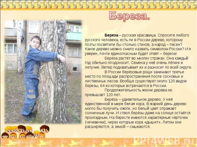 Береза. Береза – русская красавица. Спросите любого русского человека, есть ли в России дерево, которому поэты посвятили бы столько стихов, а народ – песен? Какое дерево можно смело назвать символом России? И я уверен, почти единогласным будет ответ…