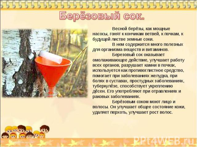 Берёзовый сок. Весной берёзы, как мощные насосы, гонят к кончикам ветвей, к почкам, к будущей листве земные соки. В нем содержится много полезных для организма веществ и витаминов. Березовый сок оказывает омолаживающее действие, улучшает работу всех…