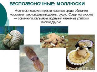 БЕСПОЗВОНОЧНЫЕ: МОЛЛЮСКИ Моллюски освоили практически все среды обитания: морски