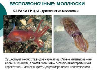 БЕСПОЗВОНОЧНЫЕ: МОЛЛЮСКИ КАРАКАТИЦЫ - десятиногие моллюски Существует около ста
