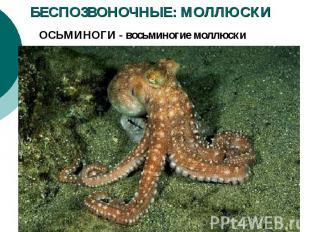 БЕСПОЗВОНОЧНЫЕ: МОЛЛЮСКИ ОСЬМИНОГИ - восьминогие моллюски
