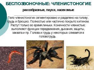 БЕСПОЗВОНОЧНЫЕ: ЧЛЕНИСТОНОГИЕ ракообразные, пауки, насекомые Тело членистоногих