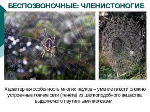 БЕСПОЗВОНОЧНЫЕ: ЧЛЕНИСТОНОГИЕ Характерная особенность многих пауков – умение пле