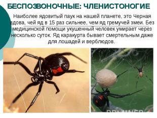 БЕСПОЗВОНОЧНЫЕ: ЧЛЕНИСТОНОГИЕ Наиболее ядовитый паук нанашей планете, это Черна