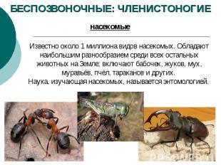 БЕСПОЗВОНОЧНЫЕ: ЧЛЕНИСТОНОГИЕ Известно около 1миллиона видов насекомых. Обладаю