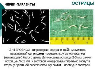 ЧЕРВИ-ПАРАЗИТЫ ОСТРИЦЫ ЭНТЕРОБИОЗ - широко распространенный гельминтоз, вызываем