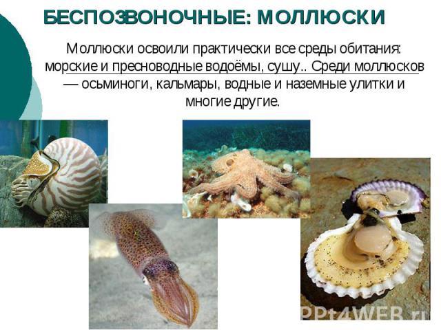 БЕСПОЗВОНОЧНЫЕ: МОЛЛЮСКИ Моллюски освоили практически все среды обитания: морские и пресноводные водоёмы, сушу.. Среди моллюсков — осьминоги, кальмары, водные и наземные улитки и многие другие.