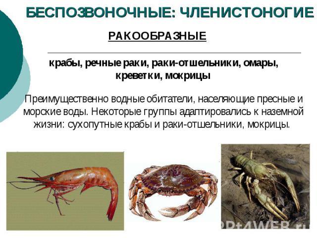 БЕСПОЗВОНОЧНЫЕ: ЧЛЕНИСТОНОГИЕ РАКООБРАЗНЫЕ крабы, речные раки, раки-отшельники, омары, креветки, мокрицы Преимущественно водные обитатели, населяющие пресные и морские воды. Некоторые группы адаптировались к наземной жизни: сухопутные крабы и раки-о…