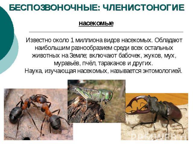 БЕСПОЗВОНОЧНЫЕ: ЧЛЕНИСТОНОГИЕ Известно около 1миллиона видов насекомых. Обладают наибольшим разнообразием среди всех остальных животных на Земле; включают бабочек, жуков, мух, муравьёв, пчёл, тараканов и других. Наука, изучающая насекомых, называет…