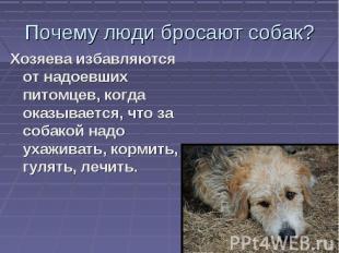 Почему люди бросают собак? Хозяева избавляются от надоевших питомцев, когда оказ