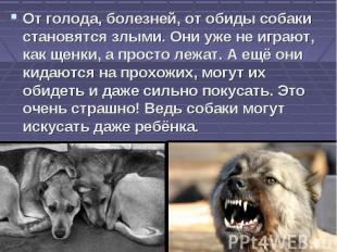 От голода, болезней, от обиды собаки становятся злыми. Они уже не играют, как ще