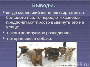 Выводы: когда маленький щеночек вырастает в большого пса, то нередко «хозяева» п