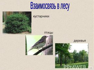 Взаимосвязь в лесу кустарники птицы деревья