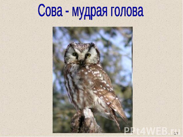 Сова - мудрая голова