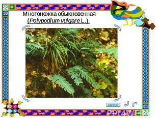 Многоножка обыкновенная (Polypodium vulgare L.).