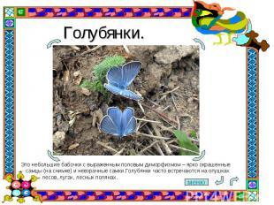 Голубянки. Это небольшие бабочки с выраженным половым диморфизмом– ярко окрашен