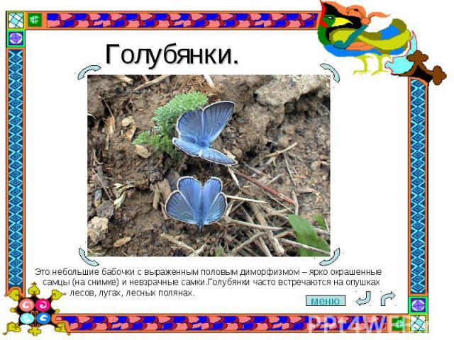 Голубянки. Это небольшие бабочки с выраженным половым диморфизмом– ярко окрашенные самцы (на снимке) и невзрачные самки.Голубянки часто встречаются на опушках лесов, лугах, лесных полянах.