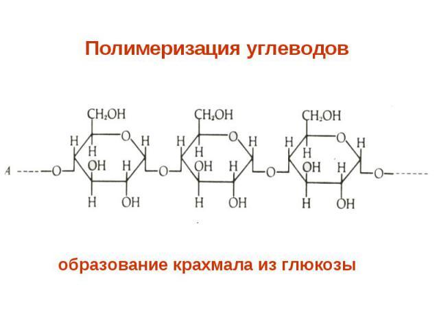 Полимеризация углеводов образование крахмала из глюкозы