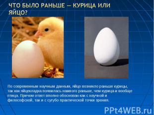 Что было раньше — курица или яйцо? По современным научным данным, яйцо возникло