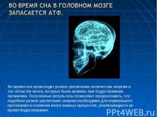 Во время сна в головном мозге запасается АТФ. Во время сна происходит резкое уве