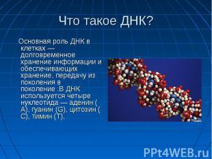 Что такое ДНК? Основная роль ДНК в клетках — долговременное хранение информации