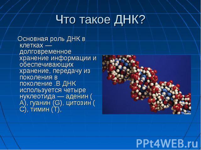Что такое ДНК? Основная роль ДНК в клетках — долговременное хранение информации и обеспечивающих хранение, передачу из поколения в поколение .В ДНК используется четыре нуклеотида— аденин (А), гуанин (G), цитозин (С), тимин (T),