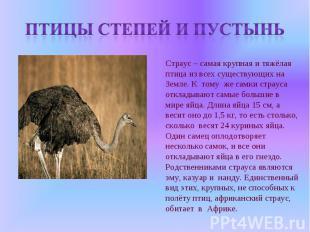 Птицы степей и пустынь Страус – самая крупная и тяжёлая птица из всех существующ
