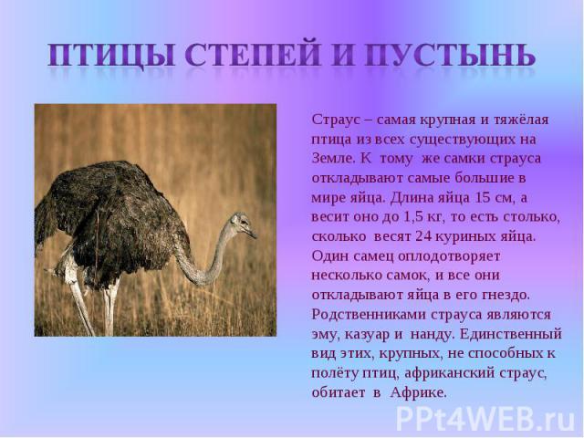 Птицы степей и пустынь Страус – самая крупная и тяжёлая птица из всех существующих на Земле. К тому же самки страуса откладывают самые большие в мире яйца. Длина яйца 15 см, а весит оно до 1,5 кг, то есть столько, сколько весят 24 куриных яйца. Один…