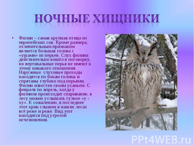 Ночные хищники Филин – самая крупная птица из европейских сов. Кроме размера, отличительным признаком является большая голова с «ушами» из перьев. Слух филина действительно вошёл в поговорку, но вертикальные перья не имеют к этому никакого отношения…