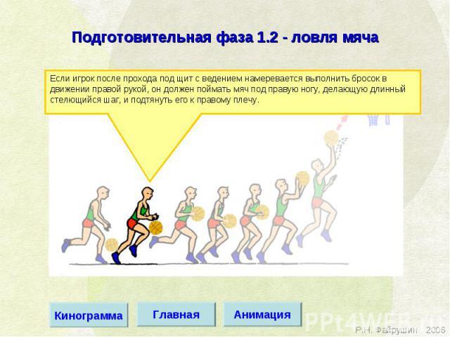 Подготовительная фаза 1.2 - ловля мяча Если игрок после прохода под щит с ведением намеревается выполнить бросок в движении правой рукой, он должен поймать мяч под правую ногу, делающую длинный стелющийся шаг, и подтянуть его к правому плечу.