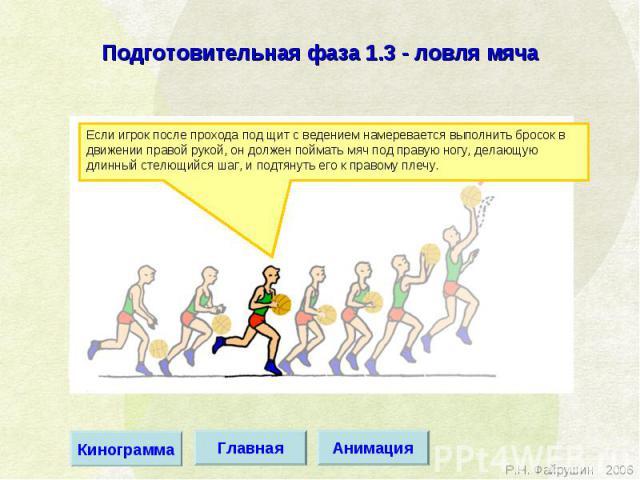 Подготовительная фаза 1.3 - ловля мяча Если игрок после прохода под щит с ведением намеревается выполнить бросок в движении правой рукой, он должен поймать мяч под правую ногу, делающую длинный стелющийся шаг, и подтянуть его к правому плечу.