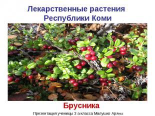 Лекарственные растения Республики Коми Брусника