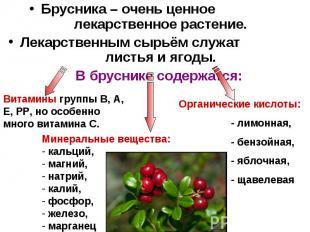 Брусника – очень ценное лекарственное растение. Лекарственным сырьём служат лист