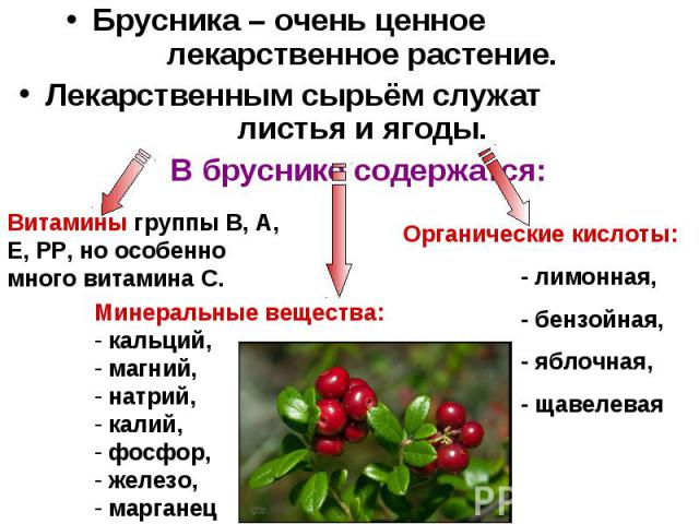 Брусника – очень ценное лекарственное растение. Лекарственным сырьём служат листья и ягоды. В бруснике содержатся: Витамины группы В, А, Е, РР, но особенно много витамина С. Минеральные вещества: кальций, магний, натрий, калий, фосфор, железо, марга…