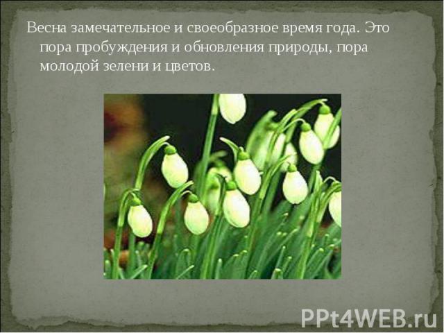 Весна замечательное и своеобразное время года. Это пора пробуждения и обновления природы, пора молодой зелени и цветов.