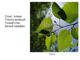 Стоит Алёна: Платок зелёный, Тонкий стан, Белый сарафан.