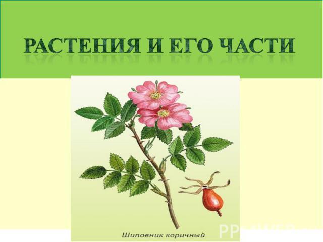Растения и его части