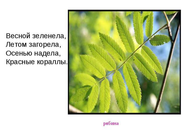 Весной зеленела, Летом загорела, Осенью надела, Красные кораллы.