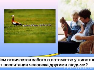 Чем отличается забота о потомстве у животных от воспитания человека другими людь