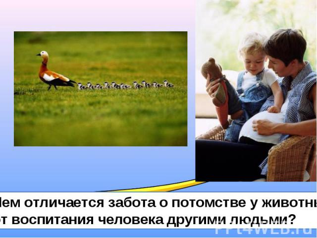 Чем отличается забота о потомстве у животных от воспитания человека другими людьми?
