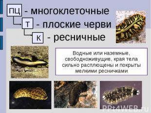 - многоклеточные - плоские черви - ресничные Водные или наземные, свободноживущи