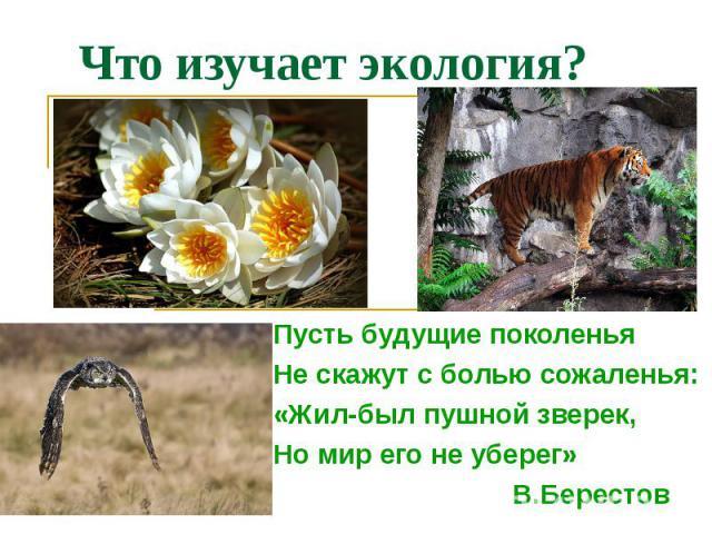 Что изучает экология? Пусть будущие поколенья Не скажут с болью сожаленья: «Жил-был пушной зверек, Но мир его не уберег» В.Берестов