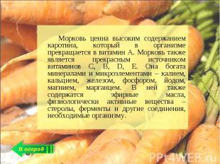 Морковь ценна высоким содержанием каротина, который в организме превращается в в