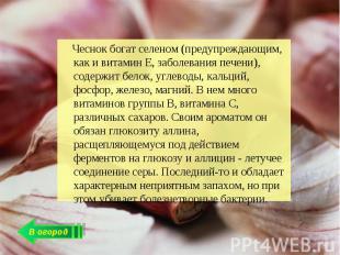 Чеснок богат селеном (предупреждающим, как и витамин Е, заболевания печени), сод
