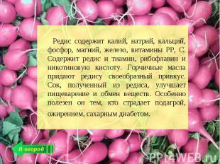 Редис содержит калий, натрий, кальций, фосфор, магний, железо, витамины РР, С. С
