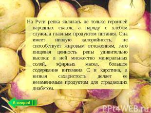 На Руси репка являлась не только героиней народных сказок, а наряду с хлебом слу